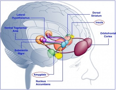 Beyin Görüntüleme ile Tespit Edilen Yeni Otizm-Anksiyete Bağlantıları