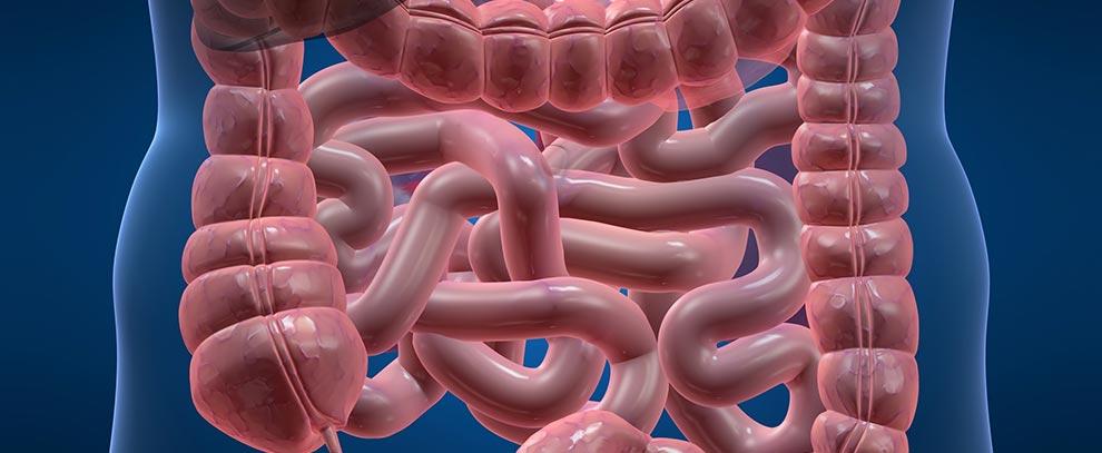 Bağışıklık Çökmesi ile İrritabl Barsak Sendromu İlişkisi