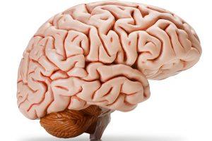 İnsan beyninde vücudun atık sisteminin ilk kanıtı keşfedildi
